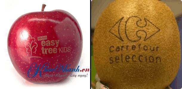 Khắc trái cây hoa quả nghệ thuật bằng laser ở Gò Vấp TpHCM